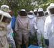 Itainópolis se torna referência na produção de mel no Piauí