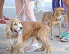 Anticorpos contra coronavírus é identificado em cão e gato