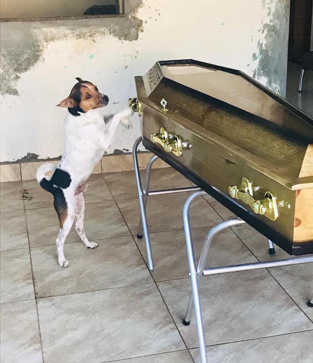Em um primeiro momento, Toy não deixava ninguém se aproximar do caixão - Foto: Reprodução