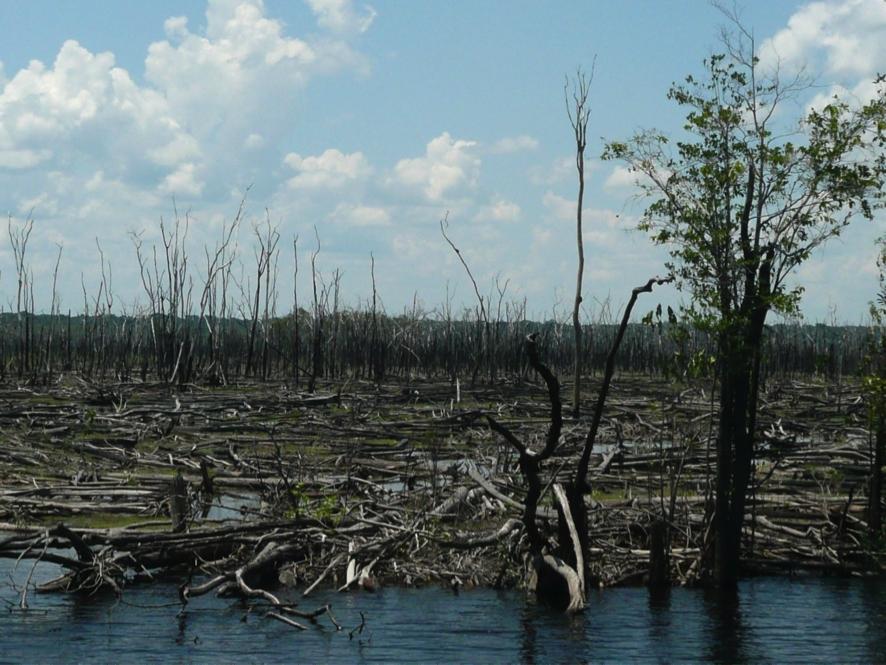 Os incêndios na Amazônia têm trazido outra vegetação, a Savana/Bernardo Monteiro Flores