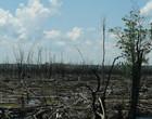 Incêndios florestais estão desenvolvendo savanas na Amazônia