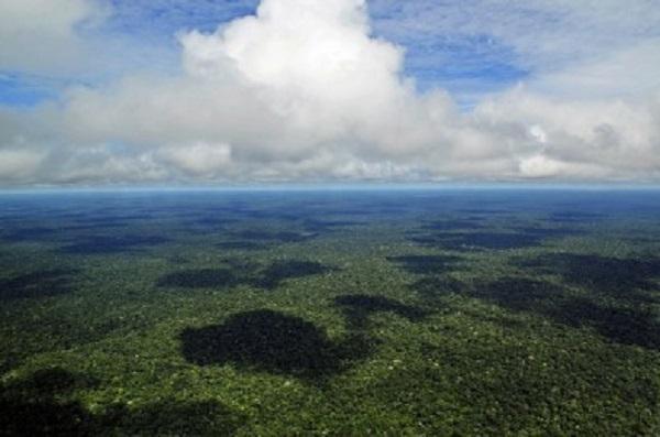 Tema foi debatido por cientistas envolvidos em estudo sobre a conservação da floresta, monitoramento de queimadas e de efeitos das mudanças climáticas durante seminário virtual promovido pelo Instituto do Legislativo Paulista em parceria com a FAPESP (foto: Neil Palme/Wikimedia Commons)