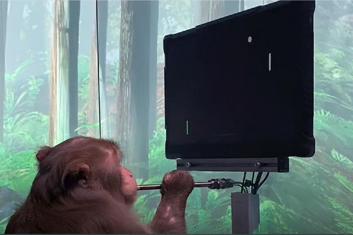 Vídeo da Neuralink mostra macaco jogando videogame | foto: Reprodução Neuralink