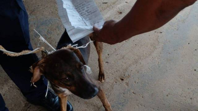 Animal foi usado por detentos para se comunicarem em presídio. (Foto: @PenitenciarioPA)