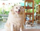 Obesidade em pets pode ter fator genético; saiba o que fazer
