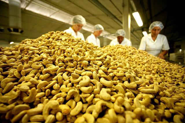 A expectativa é que haja crescimentos de 2,2% na área plantada (Foto: Reprodução/Internet)