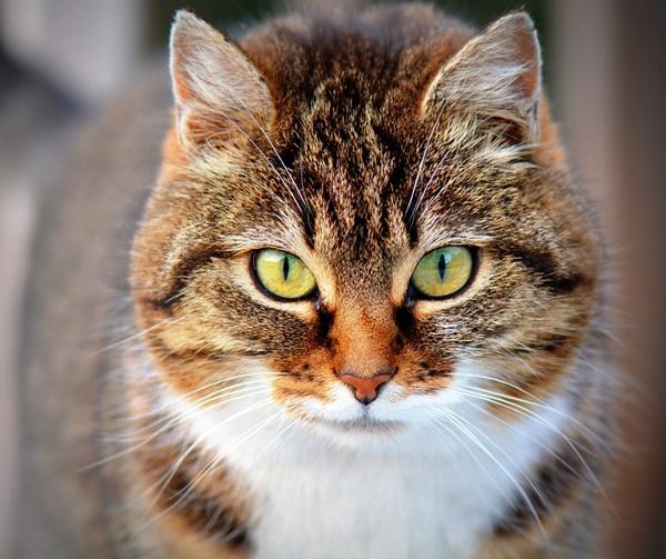 Normalmente o comprimento do bigode equivale ao tamanho da parte mais larga do corpo do animal (Foto: Pixabay)