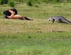 Luta mortal entre javali e tigre que é interrompida por crocodilo; vídeo
