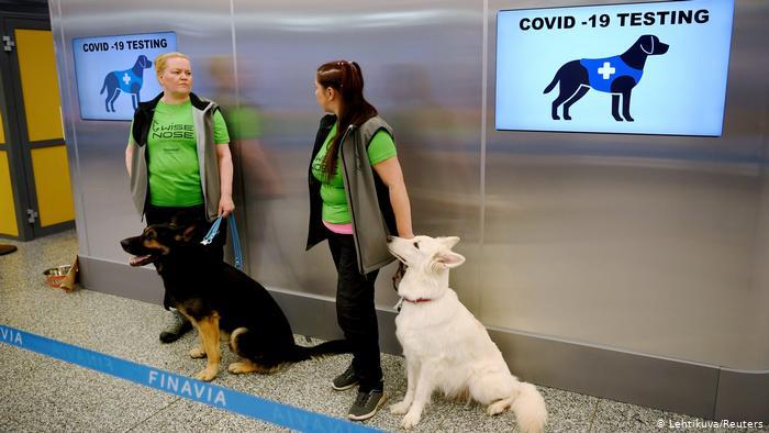 Na Finlândia pets já estão sendo usados para detectar a doença em humanos- Foto: Finavia Airport