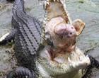 Crocodilo gigante devora cabeça de porco em parque das Filipinas; fotos!