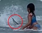 Tubarão quase pega garotinha em praia do Havaí
