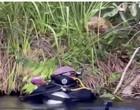 Empresários encontram sucuri gigante durante mergulho em rio de MS; vídeo