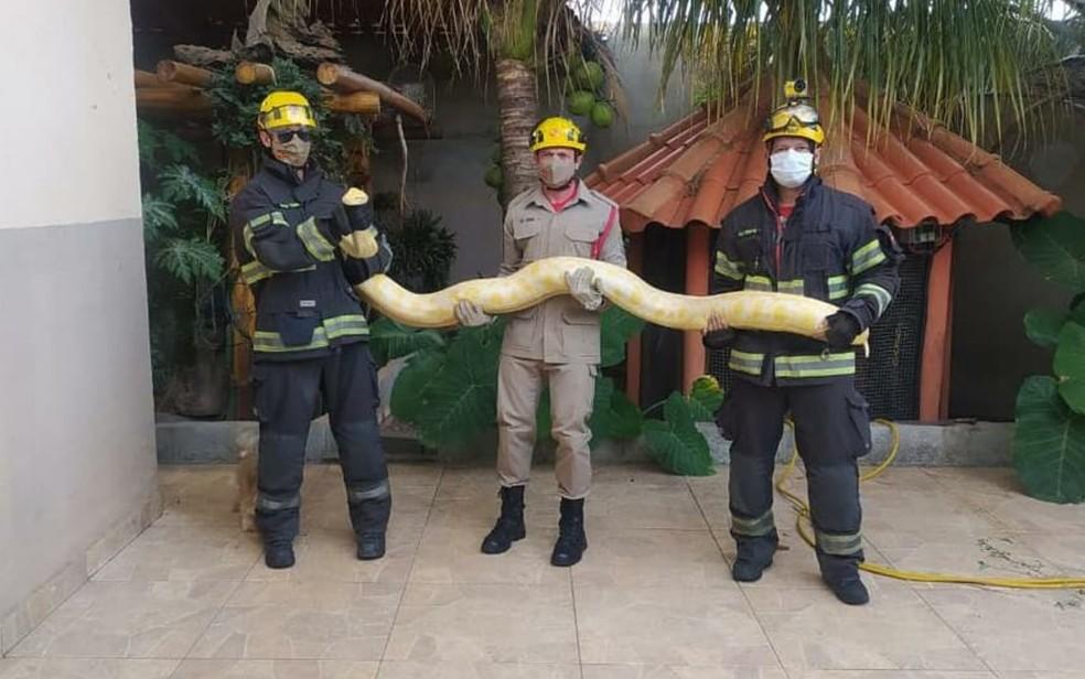 Resgate da cobra foi feita por bombeiros