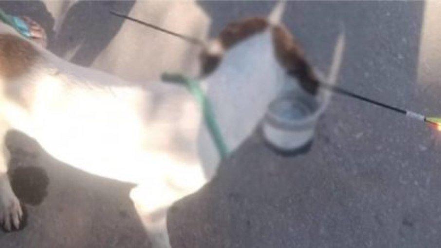 Cachorro é atingido por flecha - Foto: Divulgação/Corpo de Bombeiros