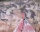 Homem atravessa rio repleto de jacarés e viraliza na internet; assista!