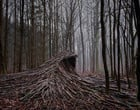 Floresta com árvores mortas tem efeito de ondas surreais