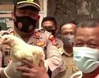 Cidade distribui galinhas para quem se vacinar contra a Covid-19