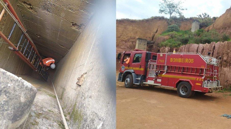 Cachorro é resgatado após queda de quase 12 metros de altura (Foto: Divulgação/ Bombeiros)