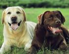 Veja 5 dicas para você aliviar o estresse do seu cãozinho