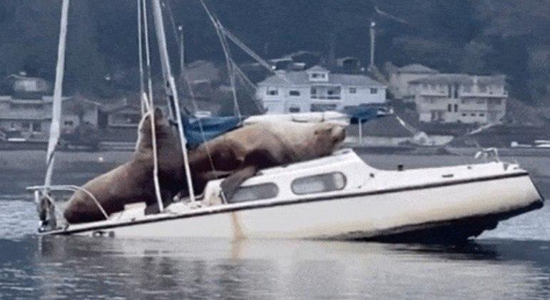 Animais em cima da embarcação. (Foto: REPRODUÇÃO-INSTAGRAM-@FISHINGJOSH)