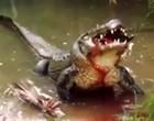 Garoto perde uma das pernas após ser atacado por crocodilo em hotel; vídeo