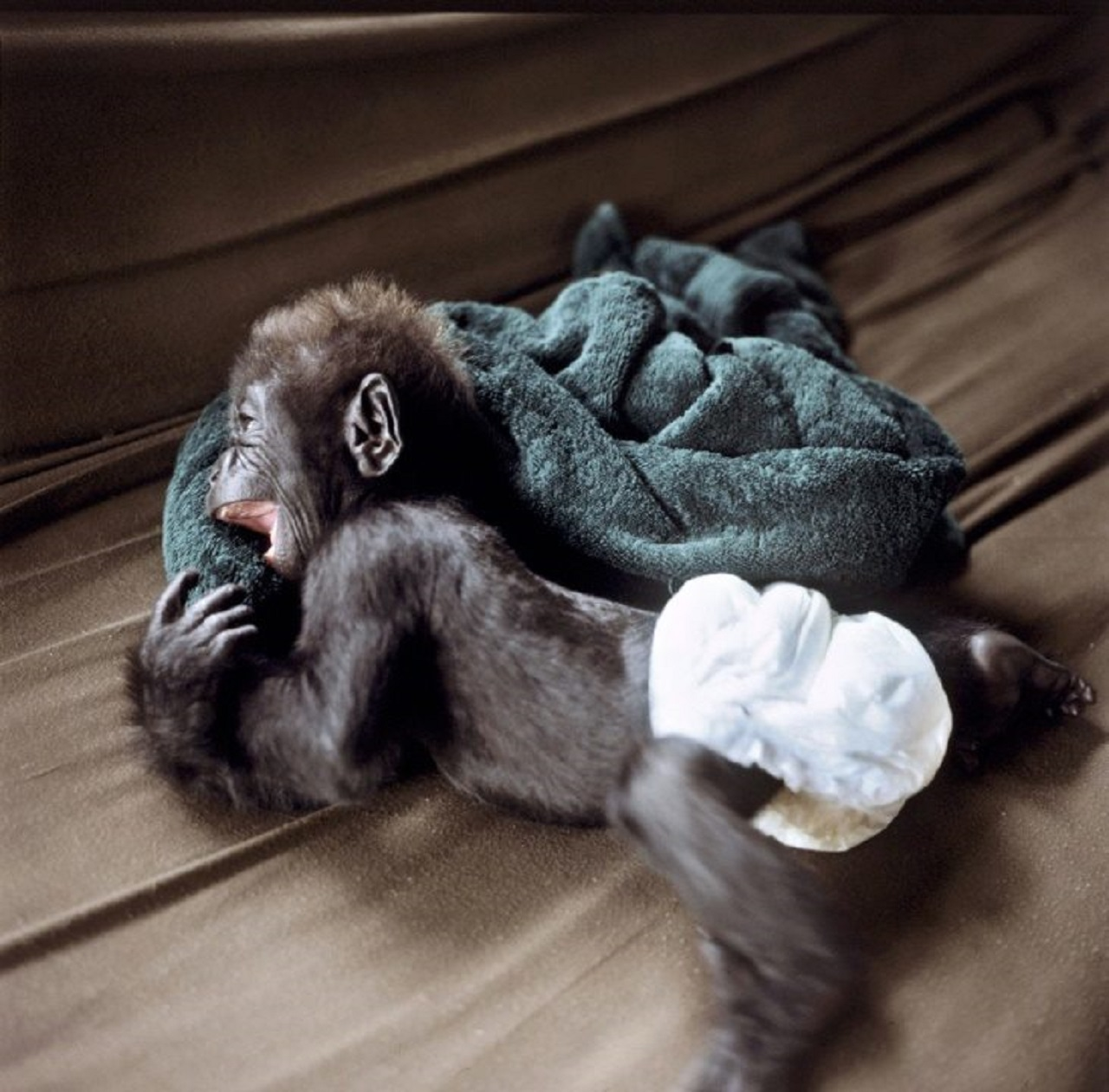 Bebê gorila é frágil e exige cuidados especiais. (Foto: AFP-Arquivos)