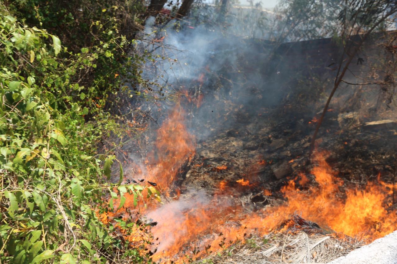 Piauí registra aumento de focos de queimadas no mês de junho   FOTO: Efrém Ribeiro