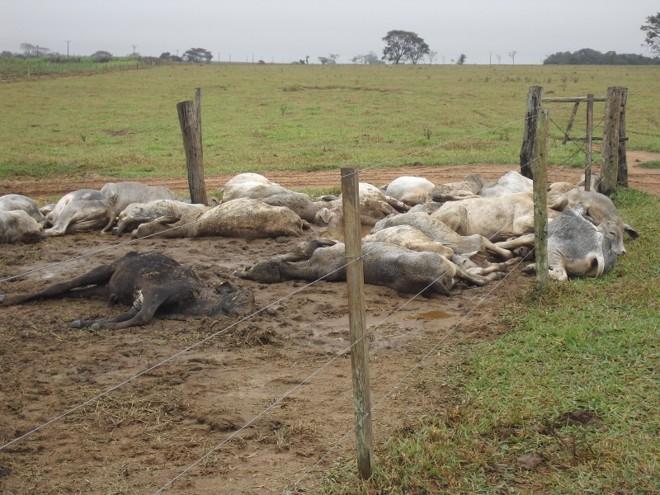 Cena desalentadora mostra os animais mortos (Foto: Reprodução)