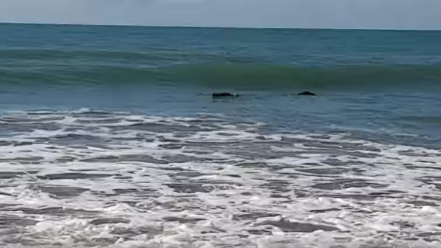 Homem se preparava para pescar quando encontrou crocodilo no mar