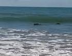 """Pescador vê """"tronco"""" flutuando na praia e tem surpresa ao se aproximar"""