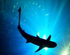 Tubarão ataca brutalmente golfinho em praia dos EUA (Imagens fortes)