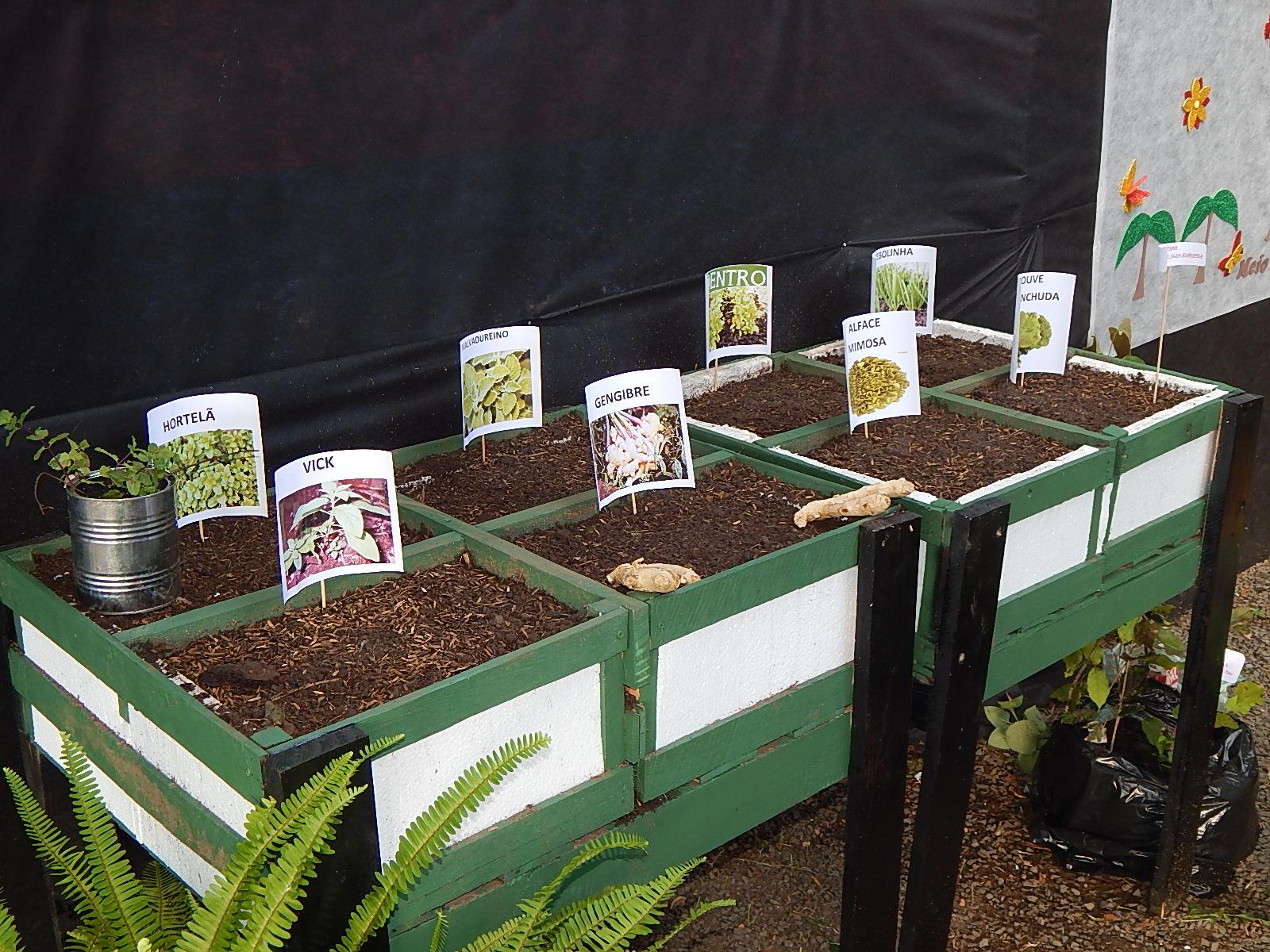 Dia Mundial do Meio Ambiente é lembrado em Agricolândia em Escolas  - Imagem 10