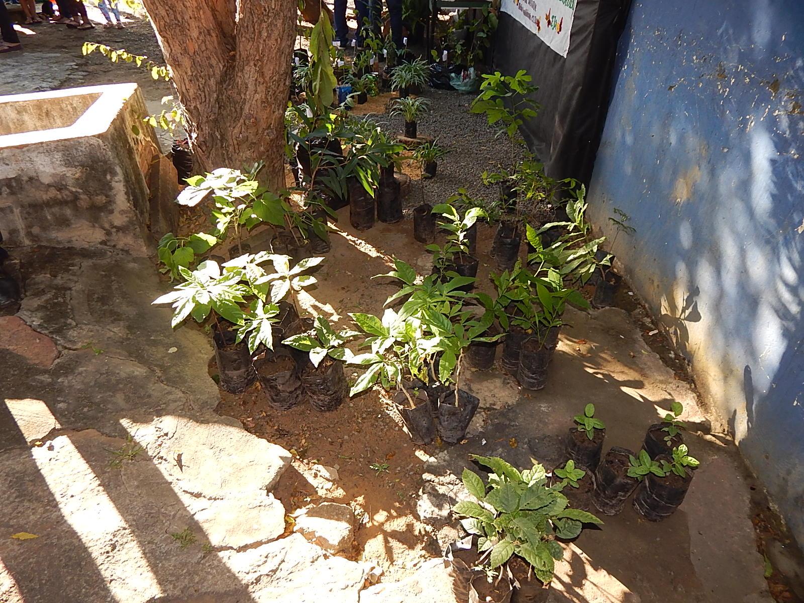 Dia Mundial do Meio Ambiente é lembrado em Agricolândia em Escolas  - Imagem 9