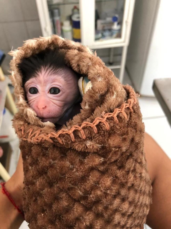 Filhote é mantido aquecido — Foto: Zoo do Complexo Cyro Gevaerd/Divulgação