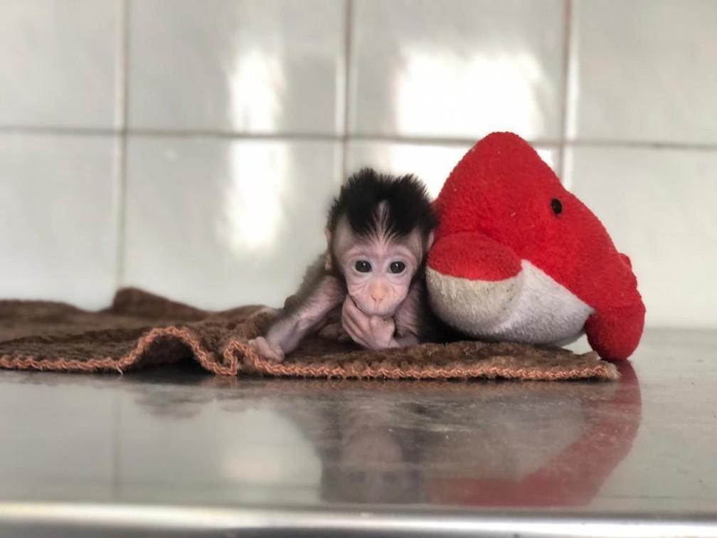 Processo de adaptação deve levar tempo, segundo veterinária — Foto: Zoo do Complexo Cyro Gevaerd/Divulgação