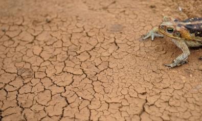 Se as emissões de gases de efeito estufa continuarem no patamar atual, temperatura média tende a subir até 4 ºC em algumas regiões. Nesse cenário, os extremos climáticos se tornarão mais intensos e frequentes, indicam projeções feitas com os novos modelos climáticos do IPCC (foto: Fernando Frazão/Agência Brasil)
