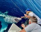 """Tubarão branco """"pede carinho"""" e depois ataca embarcação; aterrorizante!"""