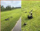 Gambás se juntam em grupo e lutam com terrível cobra píton nos EUA; vídeo