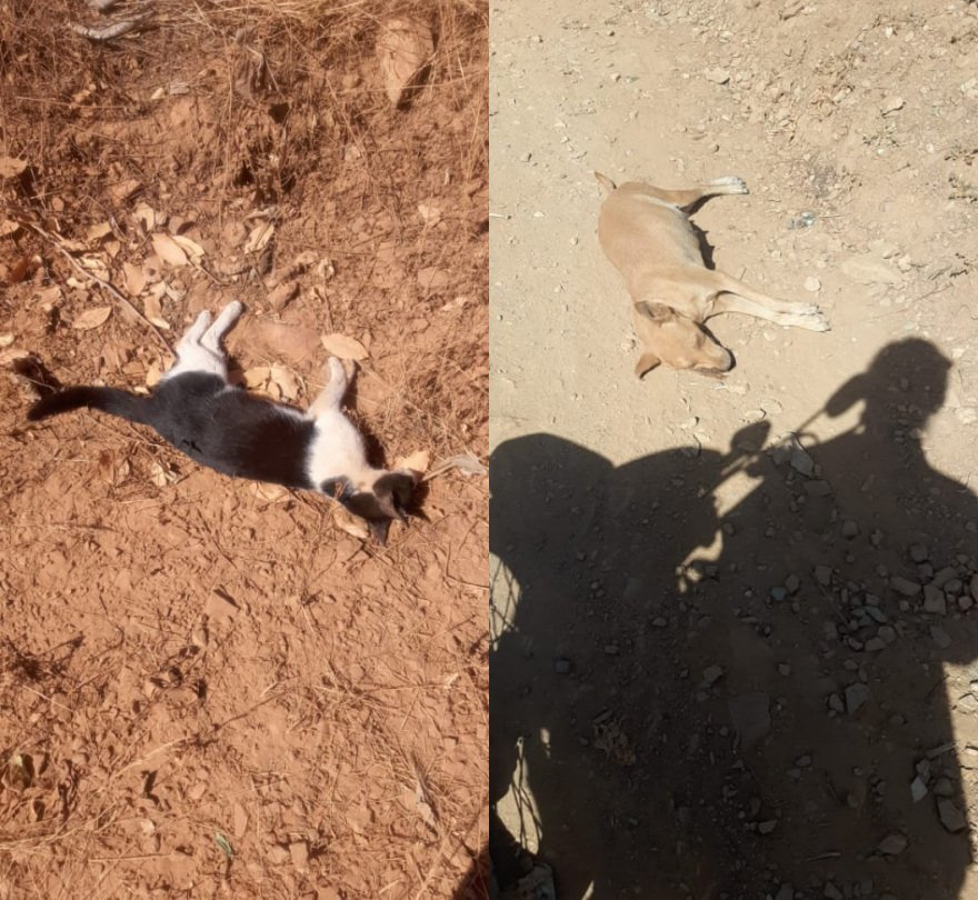 Animais são mortos vítimas de envenenamento no Piauí (Foto: Cidades Na Net)