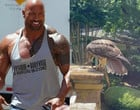 """Falcão dilacera cobra enquanto é filmado por ator Dwayne """"The Rock"""""""