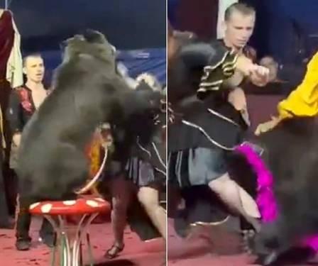 Apesar do ataque do animal e ferimentos da adestradora, o show continuou. (Foto: Reprodução)
