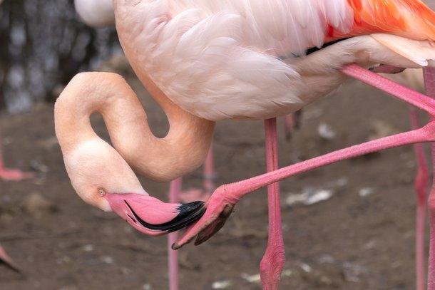 Animais de pernas longas são alvo de pesquisa. (Foto: Pixabay-Reprodução)