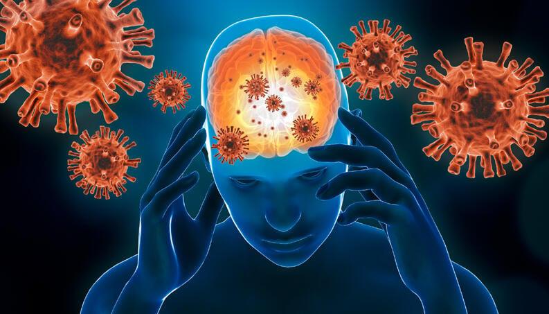 Estudos ajudam a entender o impacto do novo coronavírus no cérebro humano