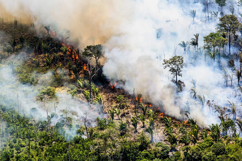 Amazônia em alerta vermelho (Foto: divulgação)