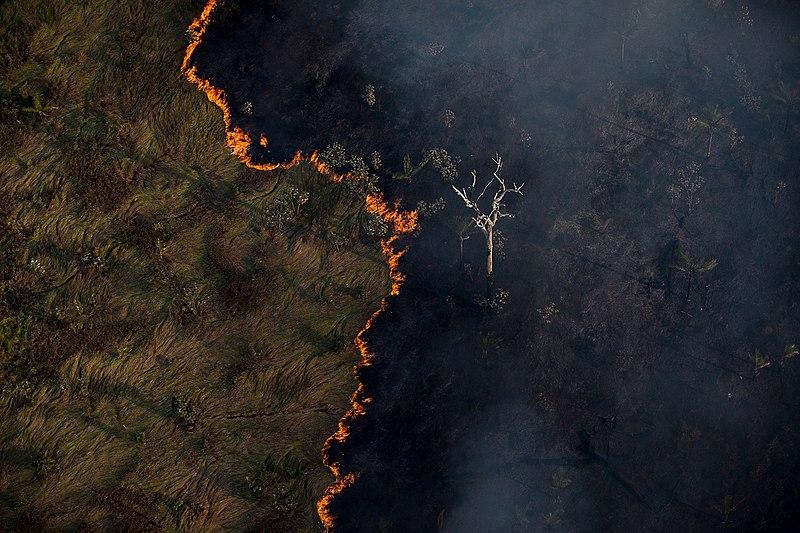 Fogo consome floresta (Foto: divulgação)