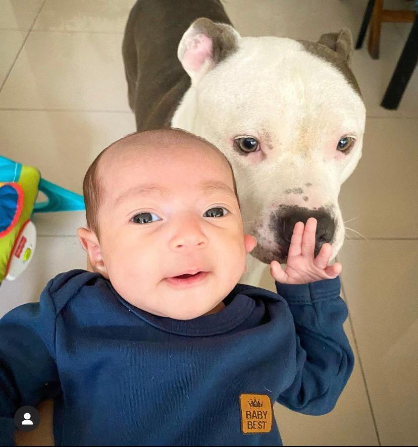 """Cremoso e """"fedolenta"""": caozinho e bebê fazem sucesso nas redes sociais ( foto: Reprodução do Instagram)"""