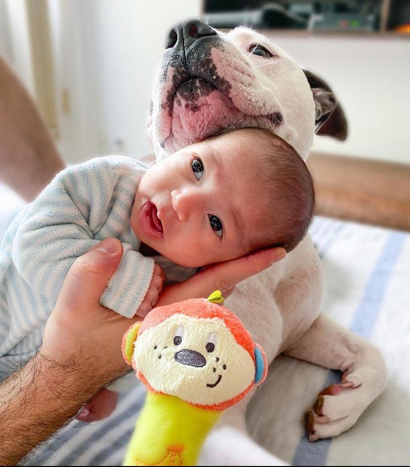 """Cremoso e """"fedolenta"""": caozinho e bebê fazem sucesso nas redes sociais ( foto: Reprodução do Instagram)Cremoso e """"fedolenta"""": caozinho e bebê fazem sucesso nas redes sociais ( foto: Reprodução do Instagram)"""