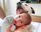 """Cão de guarda: AmStaff faz sucesso no Instagram por """"cuidar"""" de bebê"""