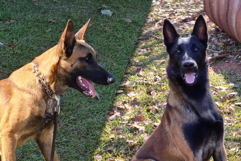 Gael e Hunter vão integrar a equipe do Centro Nacional de Cães de Detecção (Divulgação)