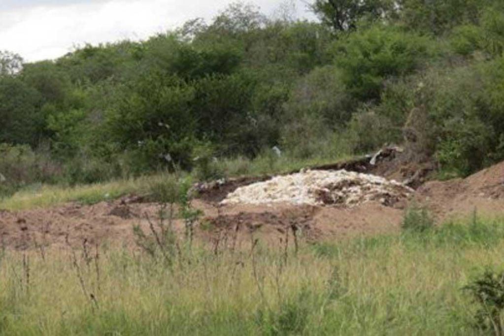 700 galinhas foram mortas a pauladas por crianças -Foto: Portal La Voz